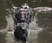 everglade airboat tours