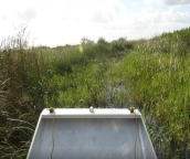 everglades fan boat tours