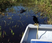 everglades tours miami