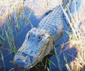 everglades boat tours near miami