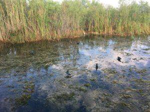 everglades tours near me