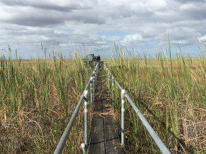 Everglades Airboat Safari Miami