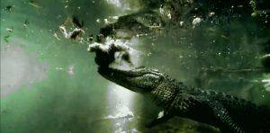 Best Everglades Tour