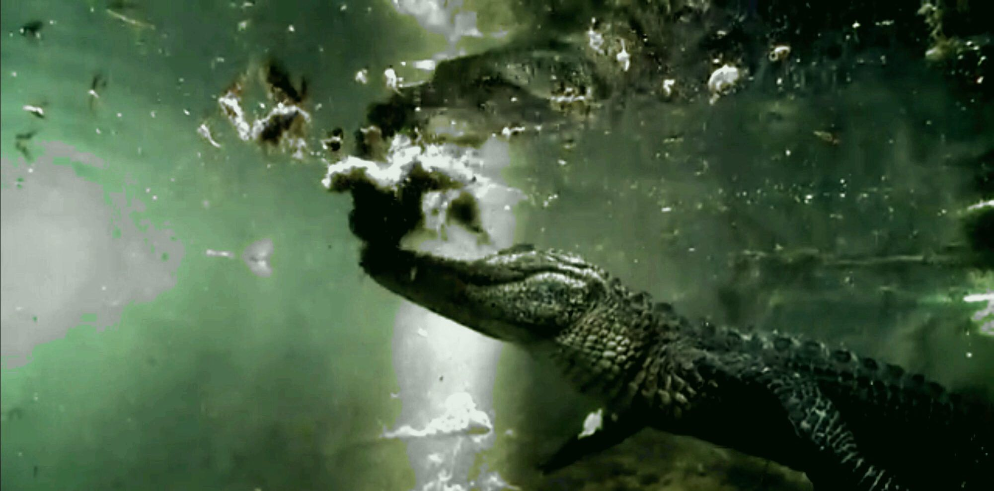 Everglades Private Airboat Tours Reviews