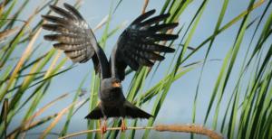 airboat birds