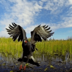 cool everglades pictures