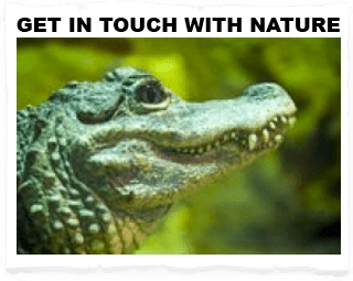 get in touch with nature