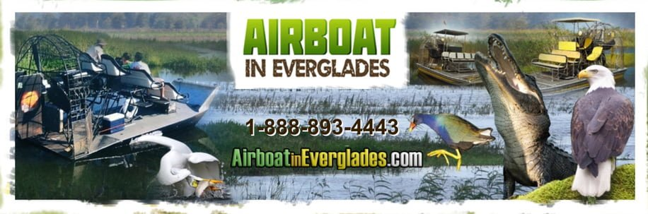 Header image for airboat In everglades