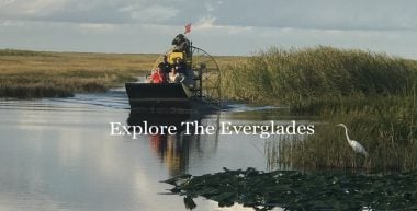 1.5 Hour Private airboat tour