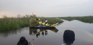 Airboat In Everglades - Miami
