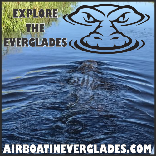 AIRBOAT IN EVERGLADES FLYER 2018